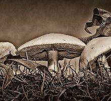 AUTUMN GREETINGS (sepia) by Sandy Stewart