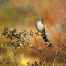 A Bird In The Bush by CarolM