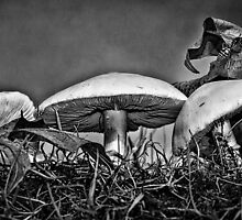 AUTUMN GREETINGS ( blk & wht) by Sandy Stewart