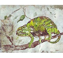 Chameleon (Chamaeleonidae) Photographic Print