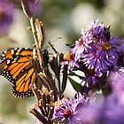 Butterfly by Anthony Roma