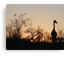 Sabi Sabi - Giraffe Silhouette Canvas Print