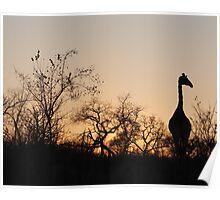 Sabi Sabi - Giraffe Silhouette Poster