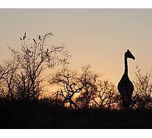 Sabi Sabi - Giraffe Silhouette Photographic Print