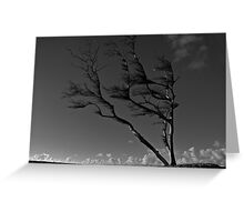 Prevailing Westerly Winds Greeting Card