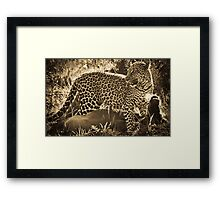 Leopard Lunch Framed Print