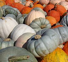 Multi-colored Pumpkins by Rosanne Jordan