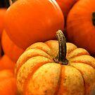 Odd Man Out, Autumn Pumpkins by kelleygirl