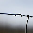 The Drop (iPhone) by Richard Owen
