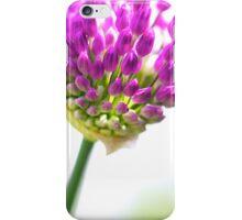 Study of an Allium (iPhone & iPod case) iPhone Case/Skin