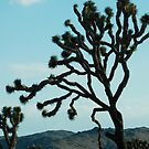 joshua tree iphone/samsung galaxy cover by mellychan
