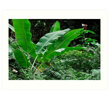 Banana tree leaves in tropical garden, close-up, Big Island, Hawaii Islands, United States Art Print