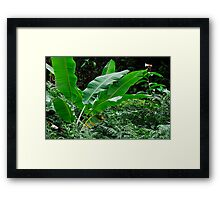 Banana tree leaves in tropical garden, close-up, Big Island, Hawaii Islands, United States Framed Print