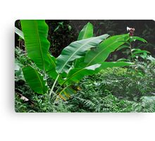 Banana tree leaves in tropical garden, close-up, Big Island, Hawaii Islands, United States Metal Print