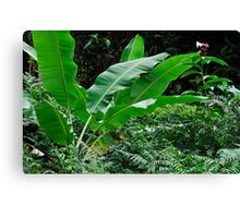 Banana tree leaves in tropical garden, close-up, Big Island, Hawaii Islands, United States Canvas Print