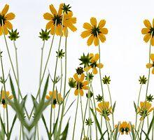 Iphone Flowers by Michael Howard