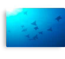 Large group of Spotted Eagle rays (Aetobatus narinari) swimming Canvas Print