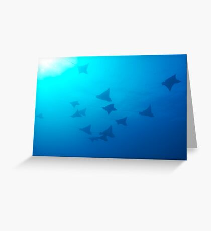 Large group of Spotted Eagle rays (Aetobatus narinari) swimming Greeting Card