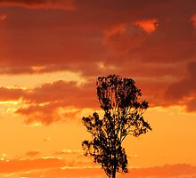 Iphone Tree Sunset by Michael Howard