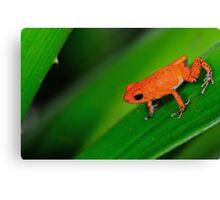 Strawberry frog II Canvas Print