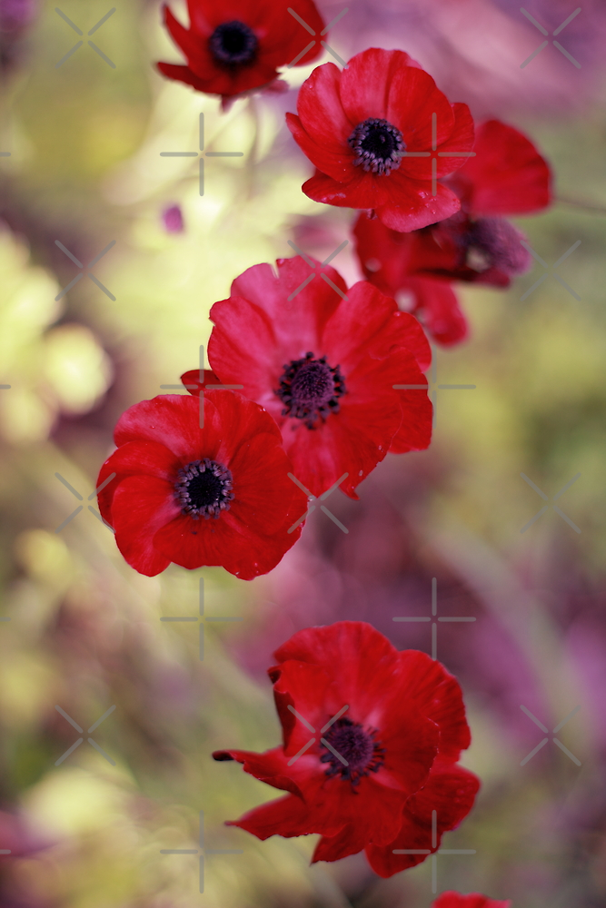 Falling Anemones by Elaine Teague