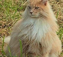 Long Haired Cat by Robert Abraham