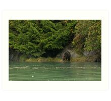 Grizzly Bear, Knight Inlet Art Print