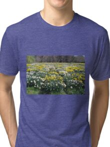 More and More Daffodils Tri-blend T-Shirt