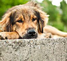 a sad dog by julien  oncete