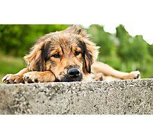 a sad dog Photographic Print