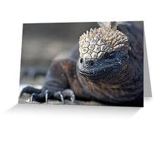 Marine Iguana (Amblyrhynchus cristatus) on rock, close-up - Ecuador, Galapagos Archipelago, Isabela Island. Greeting Card