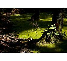 Landscape,grass Photographic Print