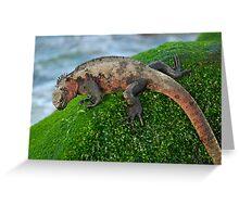 Marine Iguana (Amblyrhynchus cristatus) on rock covered with green seaweed - Ecuador, Galapagos Archipelago, Espanola Island. Greeting Card
