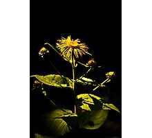 a wild flower Photographic Print