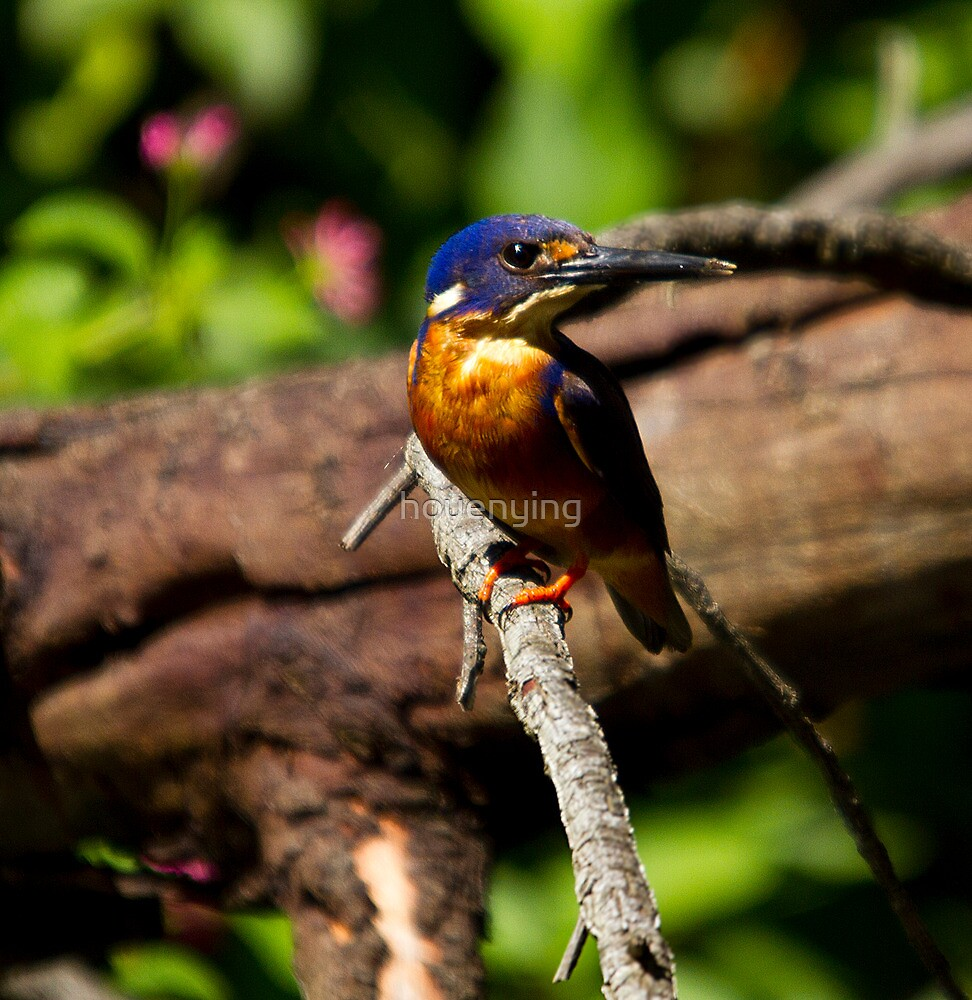 azure kingfisher by houenying
