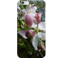 Apple blossom - iPhone case iPhone Case/Skin