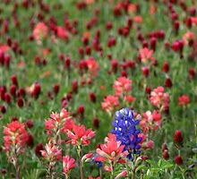 All Alone And Bluebonnet by Carolyn  Fletcher