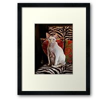 Mr. Personality Framed Print