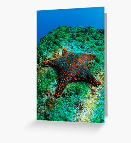 Panamic Cushion Star (Pentaceraster cumingi) on rock, underwater view, Ecuador, Galapagos Archipelago, Espanola Island Greeting Card