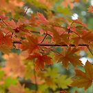Early Autumn by K D Graves Photography