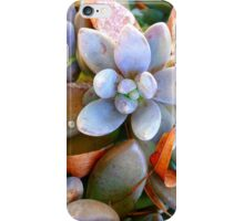 Zen Garden iphone case iPhone Case/Skin