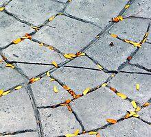 first sign of autumn by © Joe  Beasley IPA