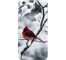 Cardinal In Snow Covered Tree iPhone Case/Skin