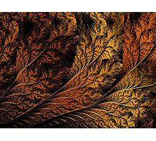 Breach-Autumn Leaf Photographic Print