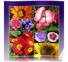 Sunkissed Flowers Collage Poster