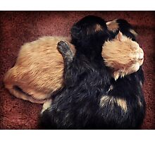 Kitten Cuddle Photographic Print
