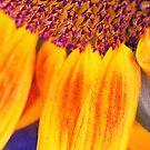 Sunflower III - iPhone case by Silvia Ganora
