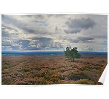 Yorkshire: A Lone Tree in a Sea of Heather Poster