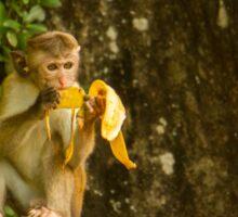 Typical Monkey Sticker