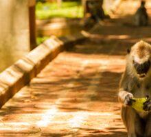 Mango Monkey Sticker
